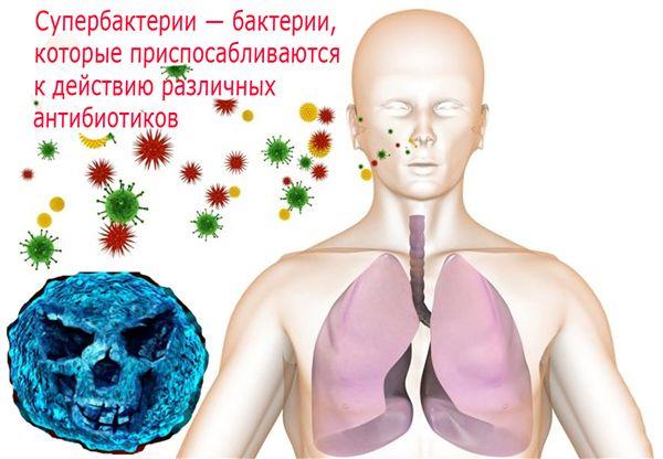 бактерии в жизни человека