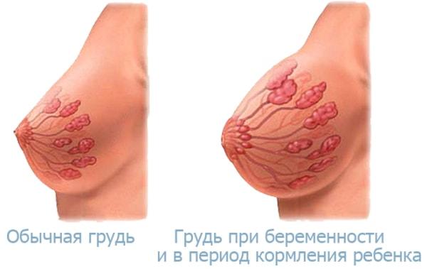 бугорки монтгомери при беременности